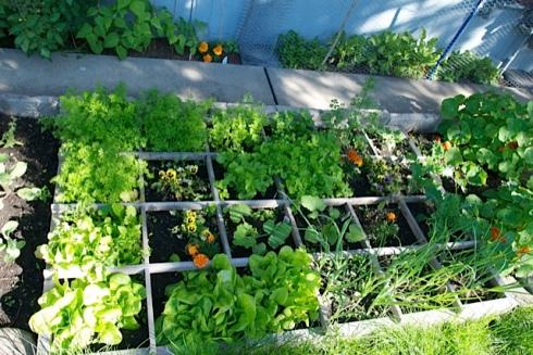 Garden looking good!